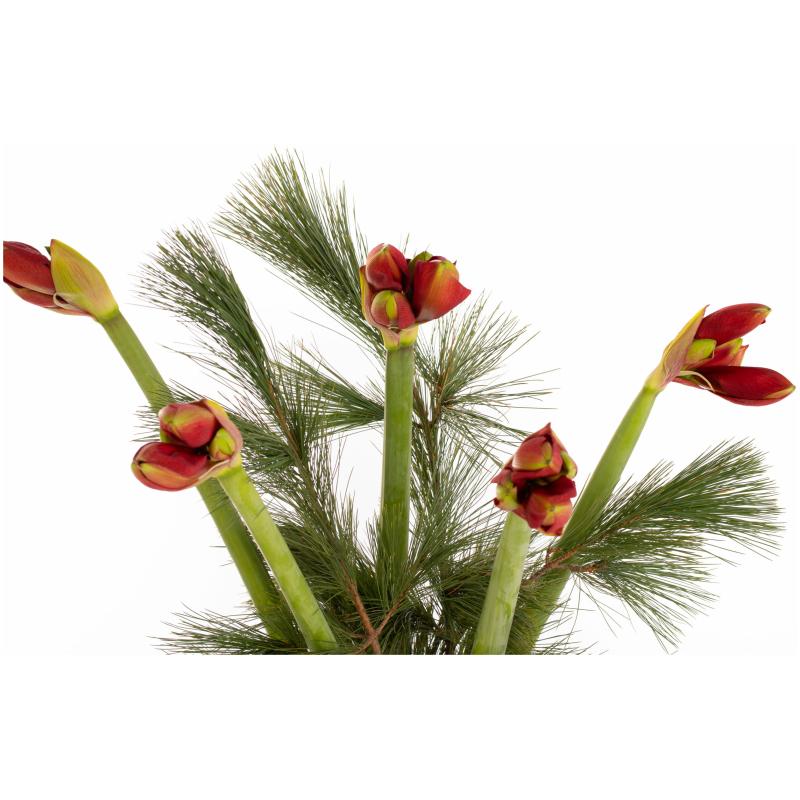 De Gier bloemen kerst 0061 scaled 1