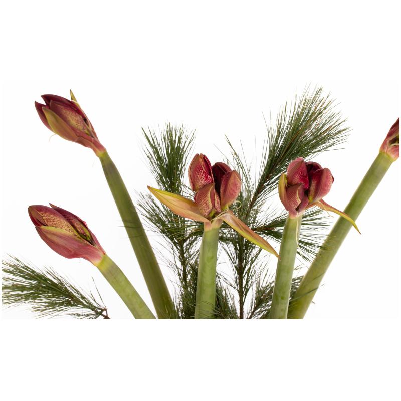 De Gier bloemen kerst 0063 scaled 1