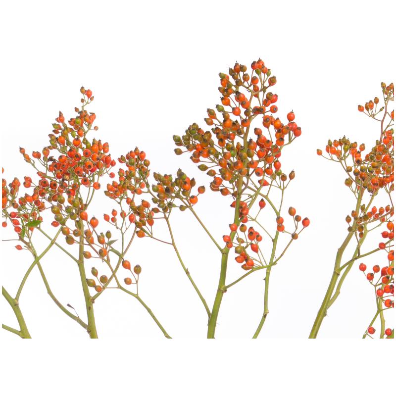 De Gier bloemen webshop 2362 kopie
