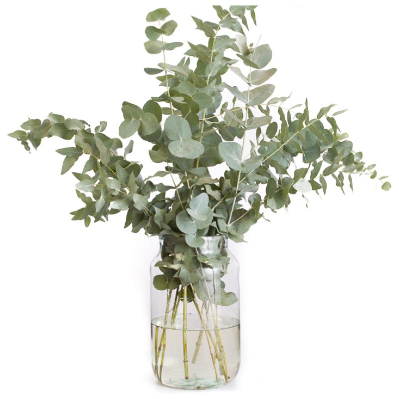 De Gier bloemen webshop 5 1