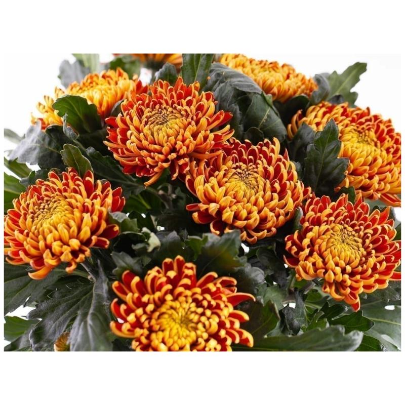 De Gier bloemen webshop 5121