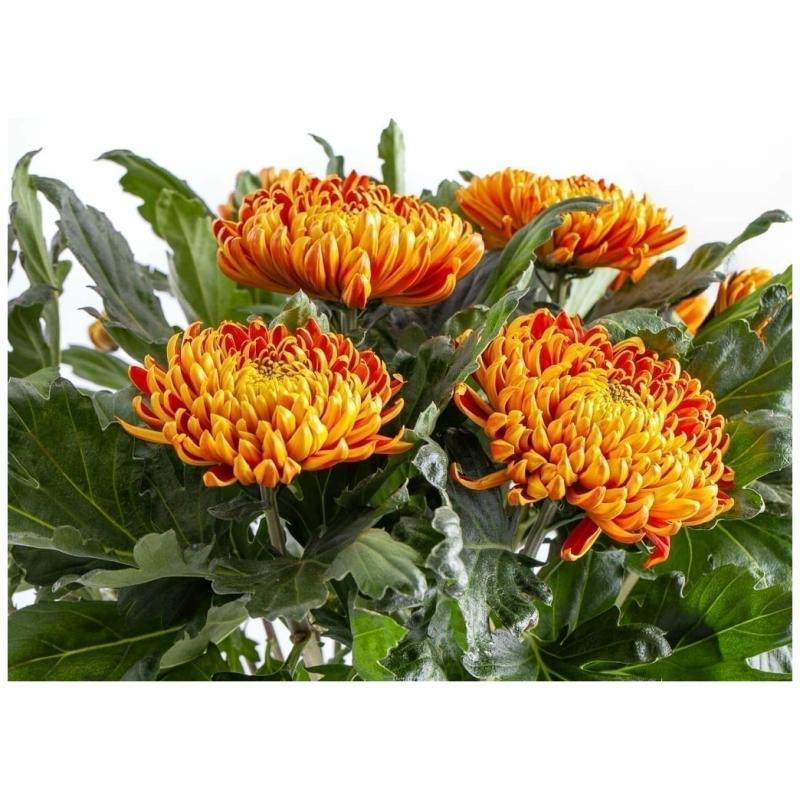 De Gier bloemen webshop 5162