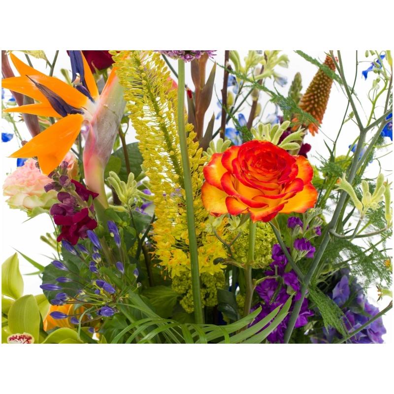 De Gier bloemen webshop 7064 scaled 1