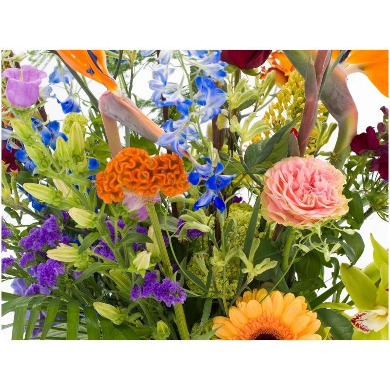 De Gier bloemen webshop 7065 2 scaled 1