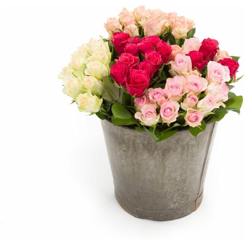 De Gier bloemen webshop 8157 2 scaled 1
