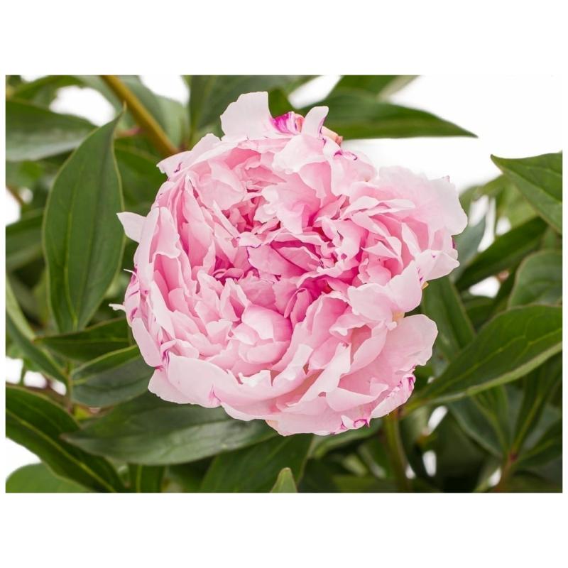 De Gier bloemen webshop 8165