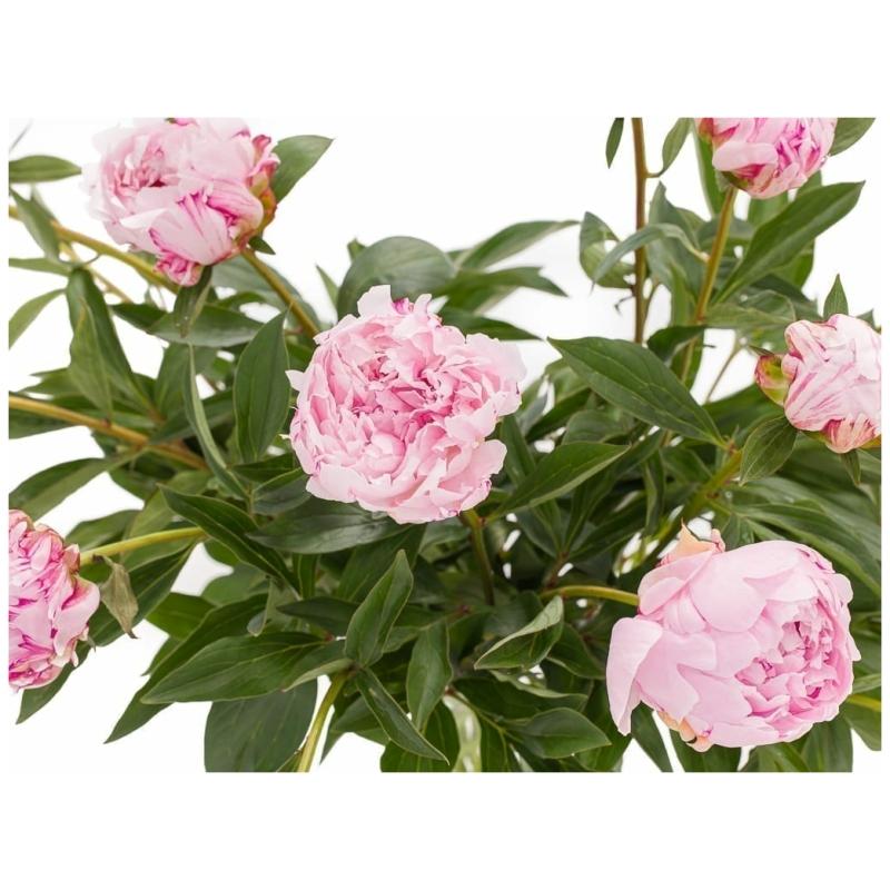 De Gier bloemen webshop 8167