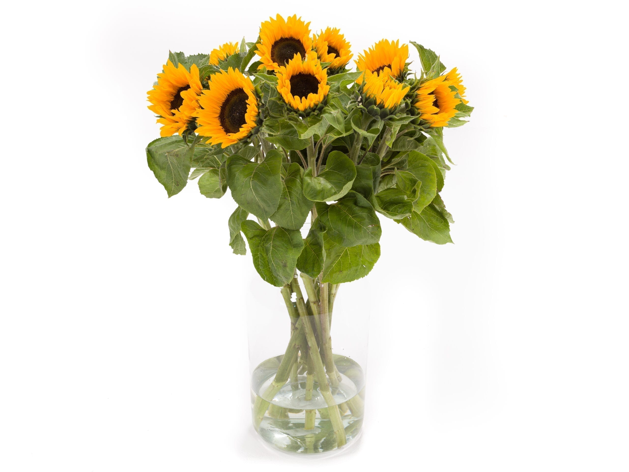 Zonnebloemen kopen voor in de vaas