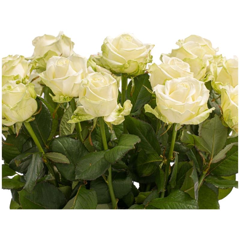 Witte rozen 2