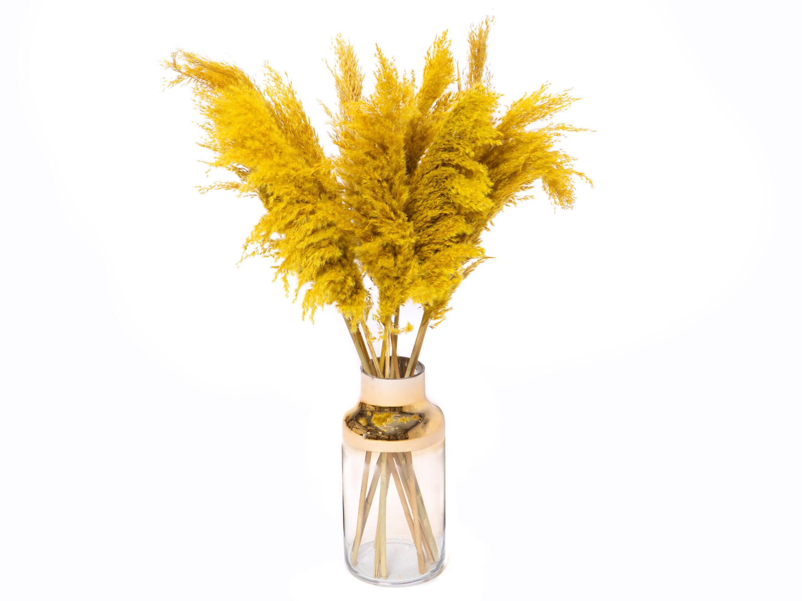 Pampas pluimen oker geel