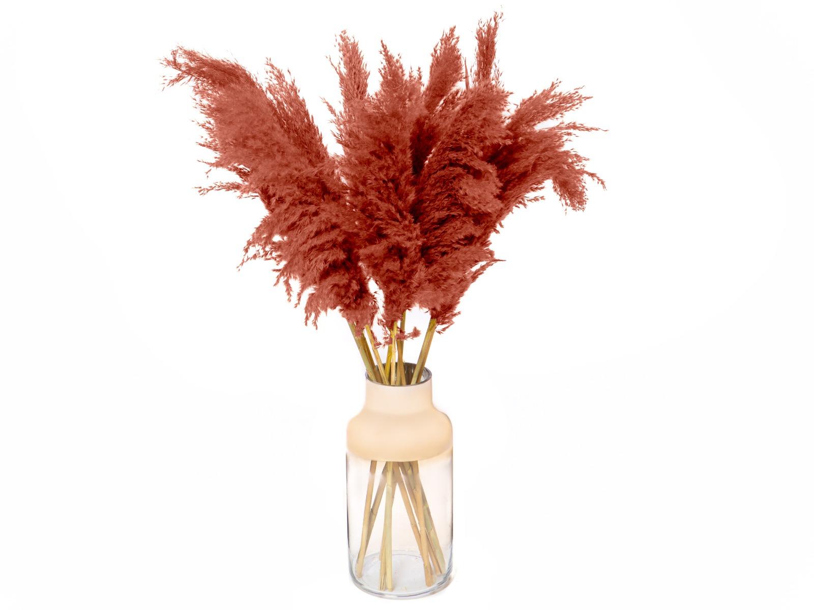 Pampas pluimen rood bruin