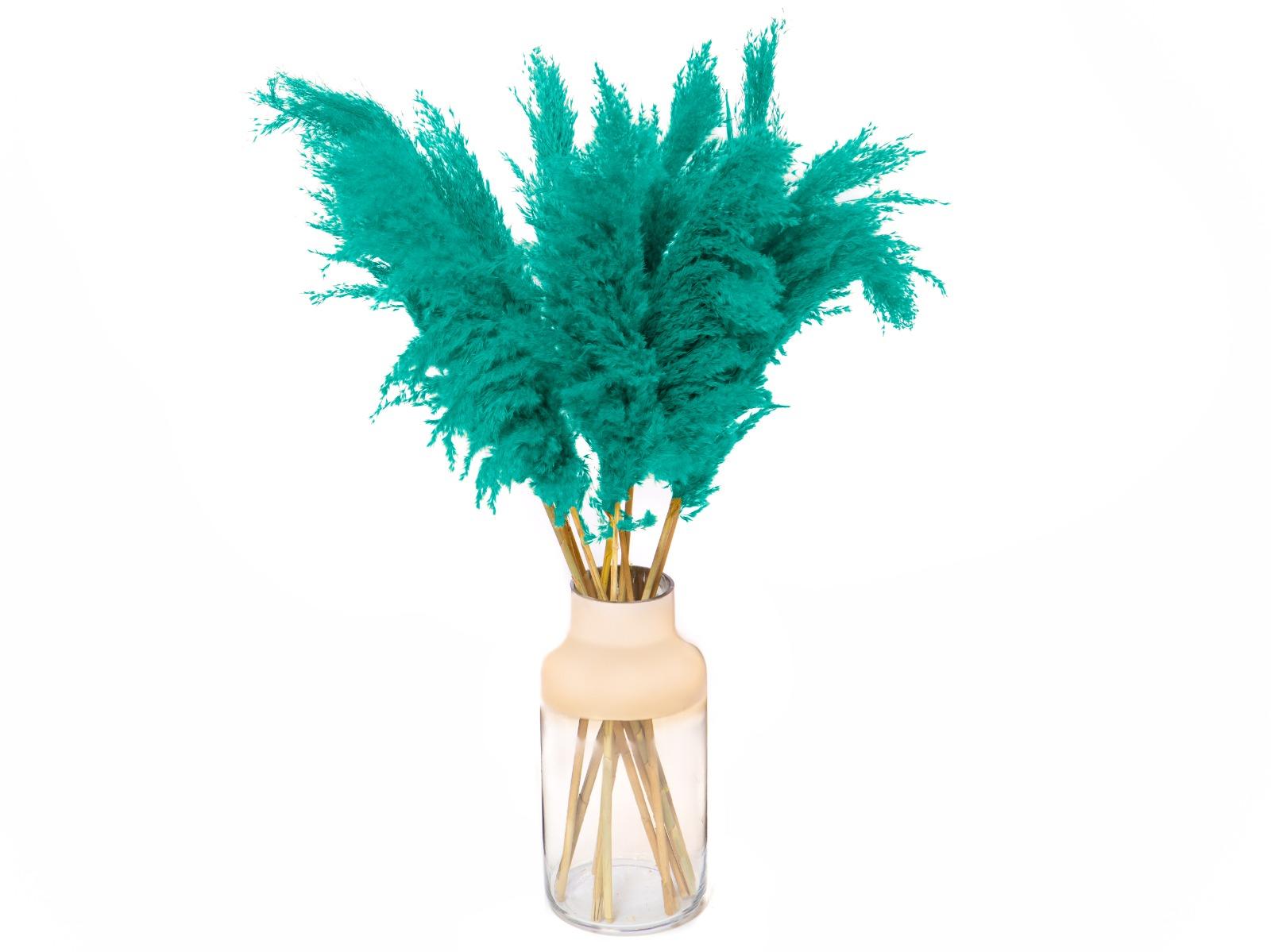 Pampas pluimen Turquoise
