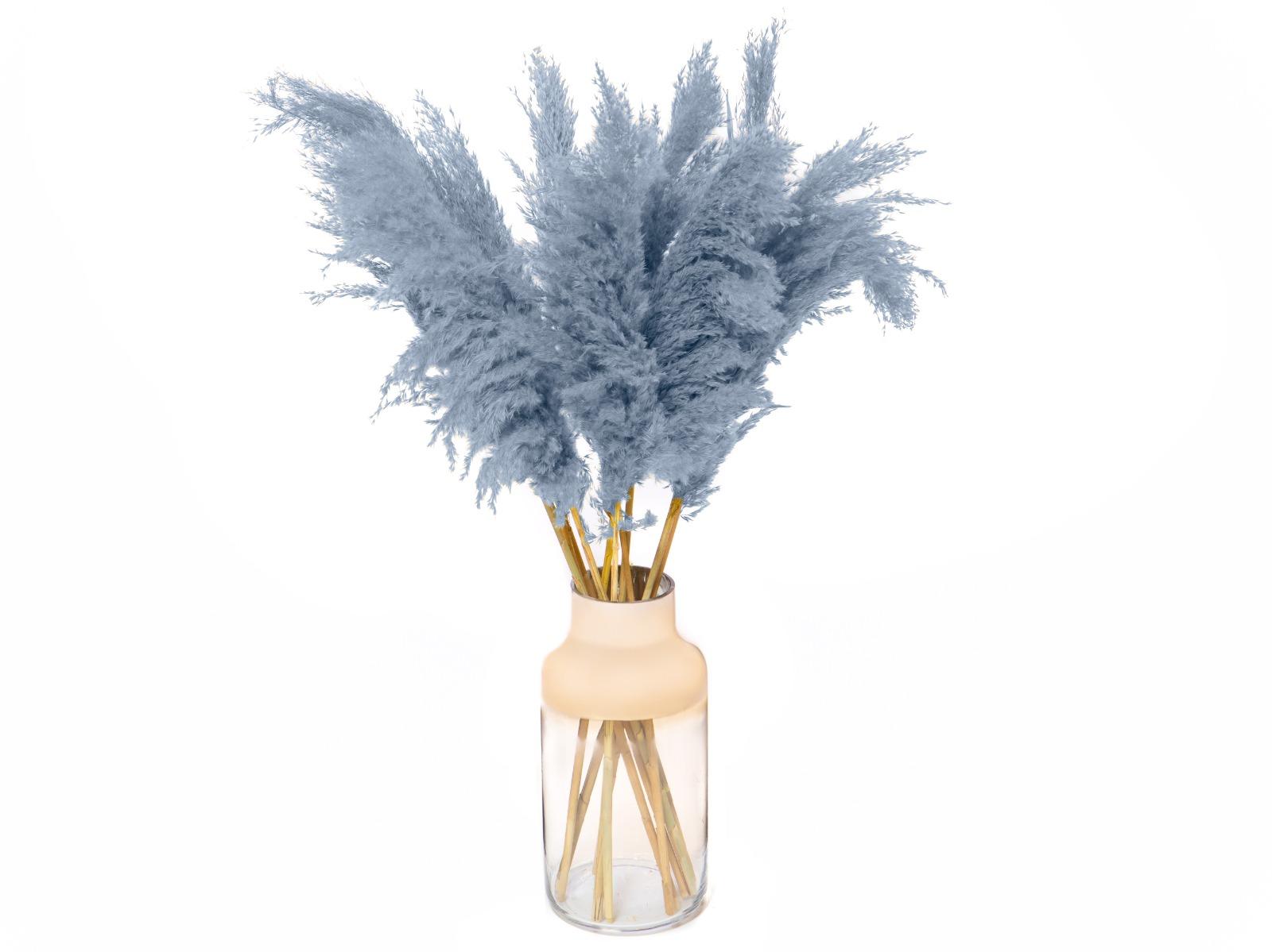 Pampasgras zacht blauw