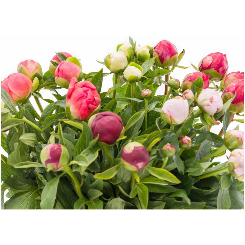 De Gier bloemen webshop 7971 scaled