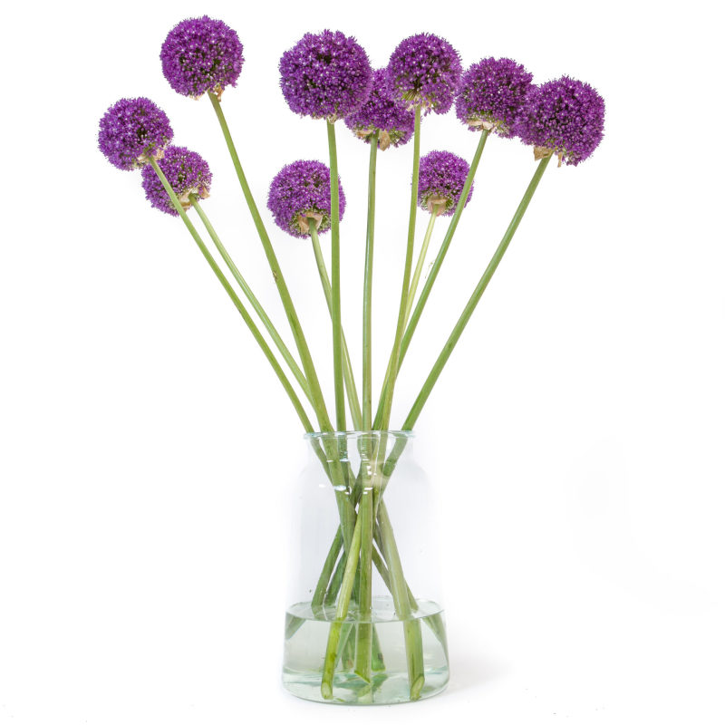 Allium in de vaas