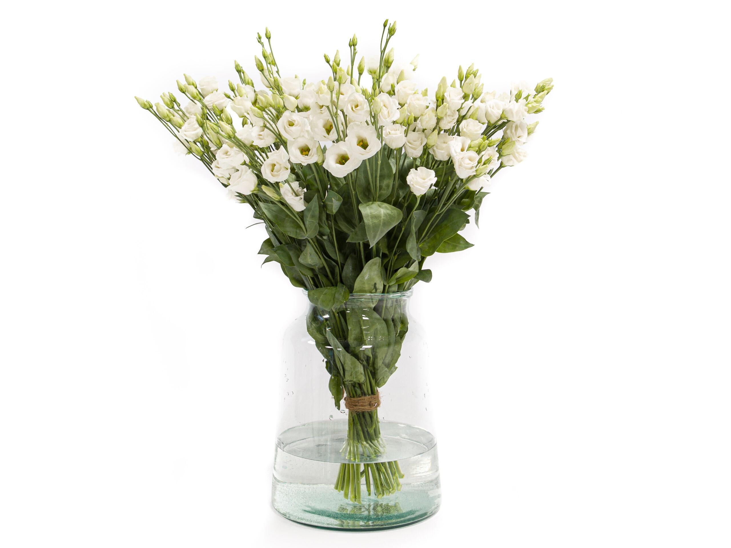 Witte lisianthus kopen