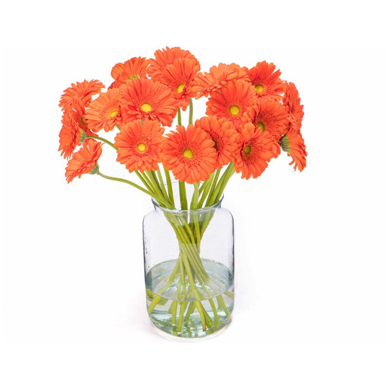 Oranje gerbera's kopen