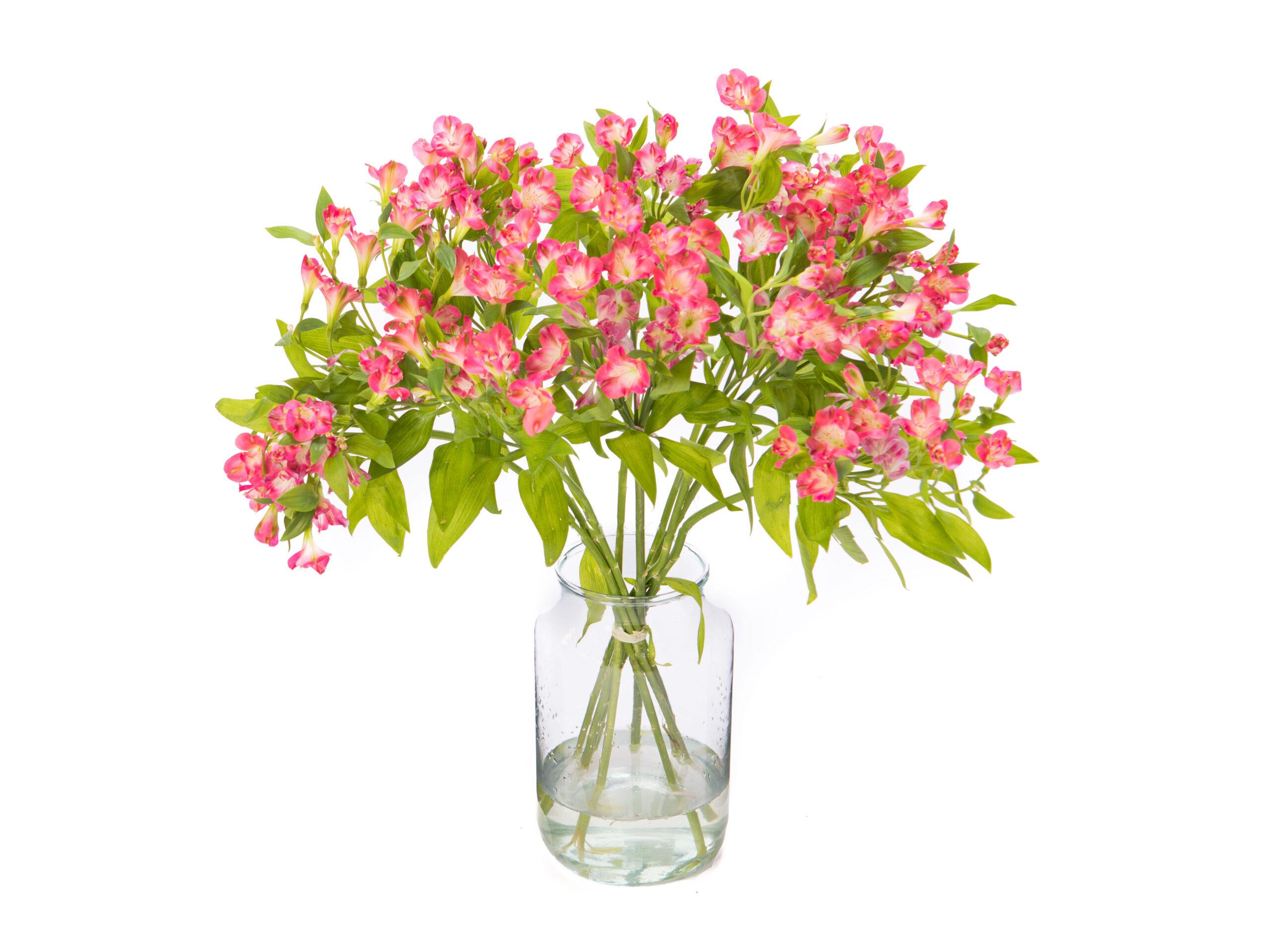 Alstroemeria kopen roze